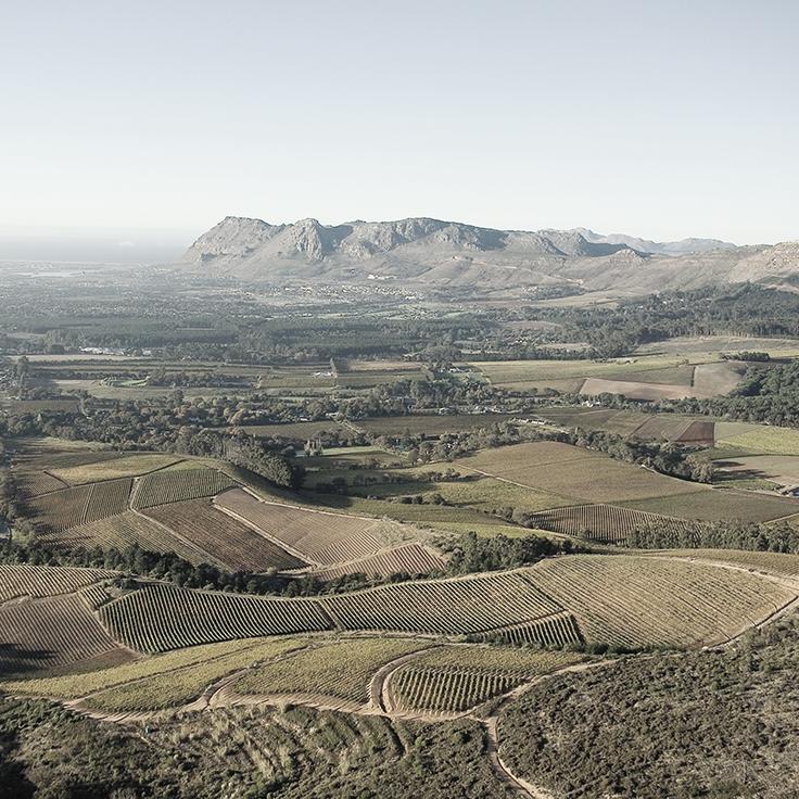 Constantia winemaking begins